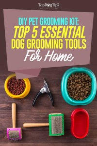 Top Best Grooming Tools for Dogs