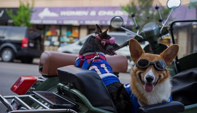 Who Knew Doggy Sunglasses Were Such Big Business