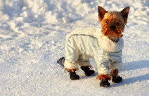 Best Dog Coats for Winter and Rain