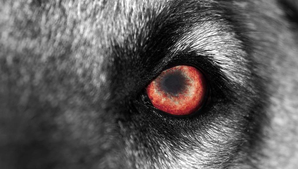 Cynophobia - How to Overcome Fear of Dogs