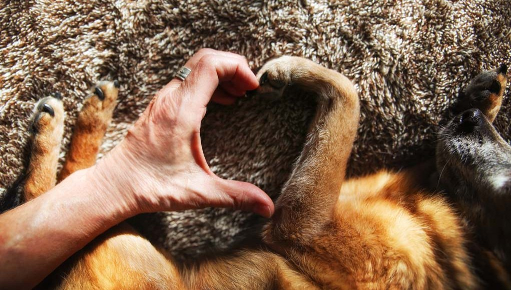 Does My Dog Love Me - How to Read Dogs Emotions