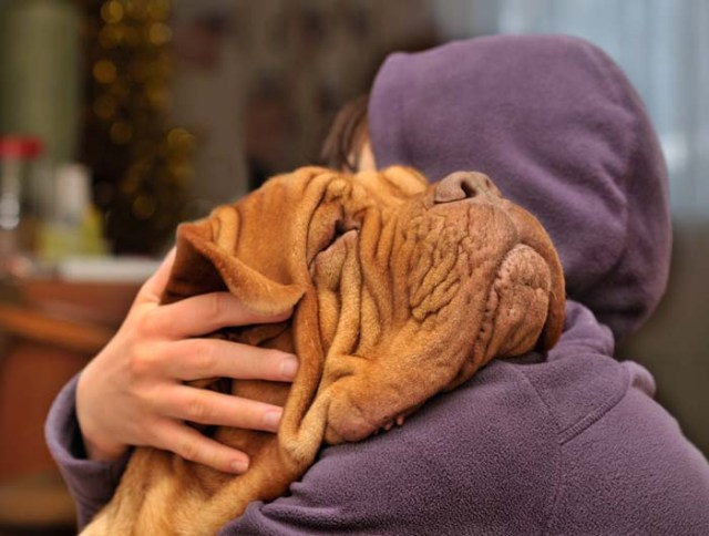 Does My Dog Love Me - Myths and Facts About Dog Emotions