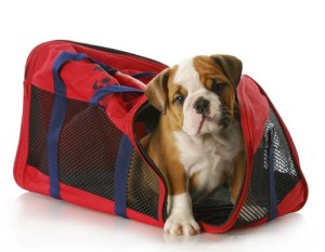 Dog Travel Bags - How to Choose the Right One 1