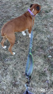 Mutts and the City Hands Free Dog Leash System Review