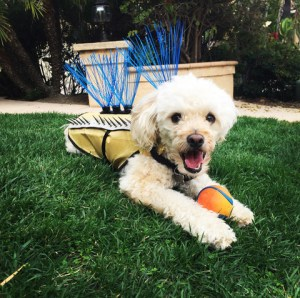Protect Your Dog From Predators with The CoyoteVest