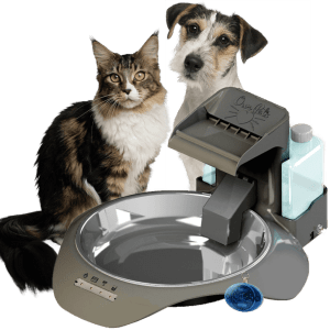SmartLink Feeders and Waterers Are Ideal for Busy Dog Owners