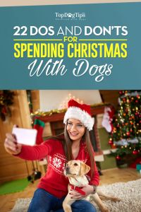 Spending Christmas with Dogs