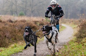 The Best Blogs About Biking for Dogs