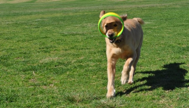 The HurriK9 is What Happens When a Physicist Develops a Dog Toy