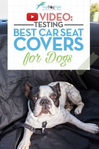 Top Best Car Seat Cover for Dogs Comparison