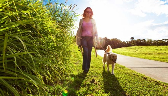 Walking Your Dog - A Guide To Do It Safely 7