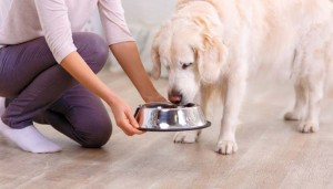 What Type of Dog Foods Our Dogs Need to Eat