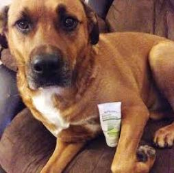 Your Itchy Dog Could Win Cash From TriDerma
