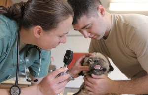 10 Resources for Choosing the Best Veterinarian