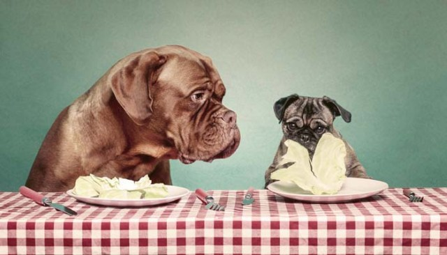 Adjustments to dog diet and calories