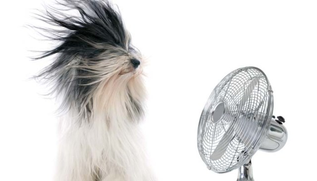 Blow dry dogs to reduce shedding in dogs