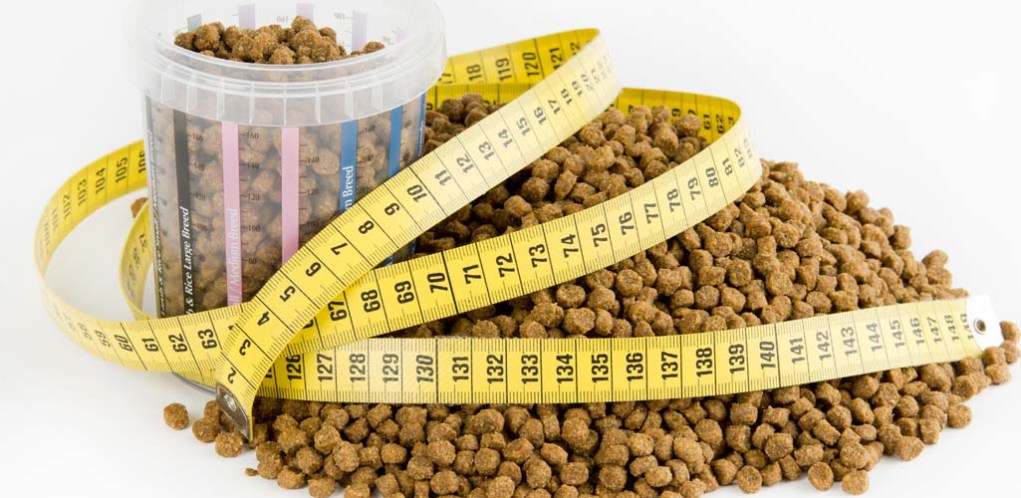 Dog Diets and How to Implement Them