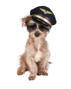 Dog Plane Travel