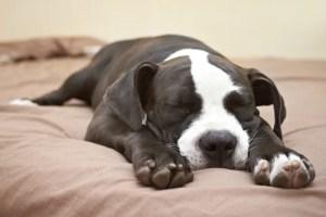 Dog Superman Sleeping Position