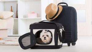 Dog Travel Crates