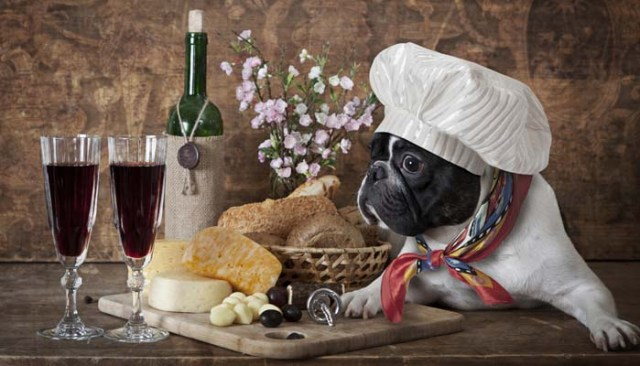 Dog food to reduce shedding