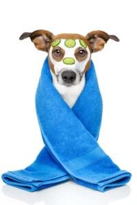 Dog spa for shedding dogs