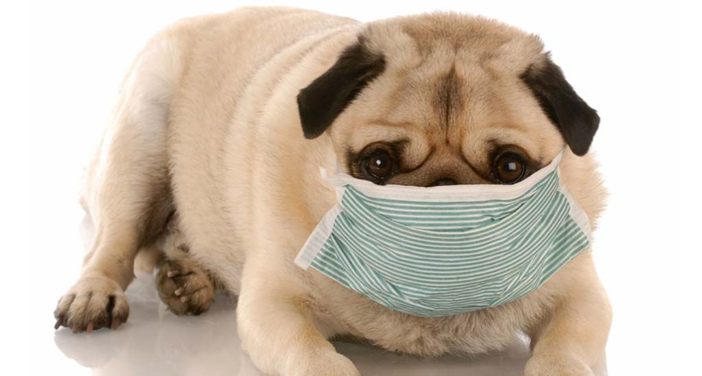 Dogs Immune System Boosting with Holistic Dog Health Approach