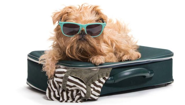 Holidays with Dogs and How to Travel on Vacation with Your Dog
