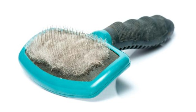 How to Prevent Shedding in Dogs and Pets
