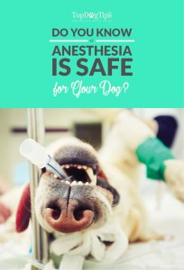 Is Anesthesia Safe for My Dog