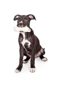 Rawhide chews for puppies