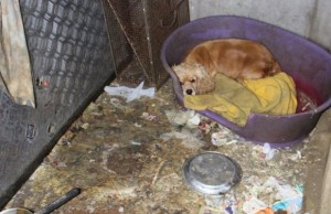 This Amazing Puppy Mill Rescue Will Leave You in Tears