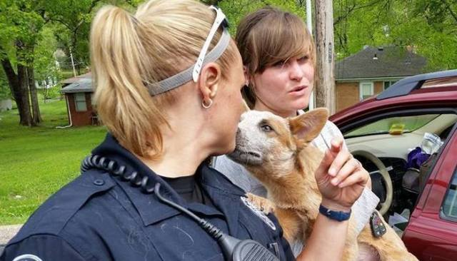 20 Rescue Pups in a Car