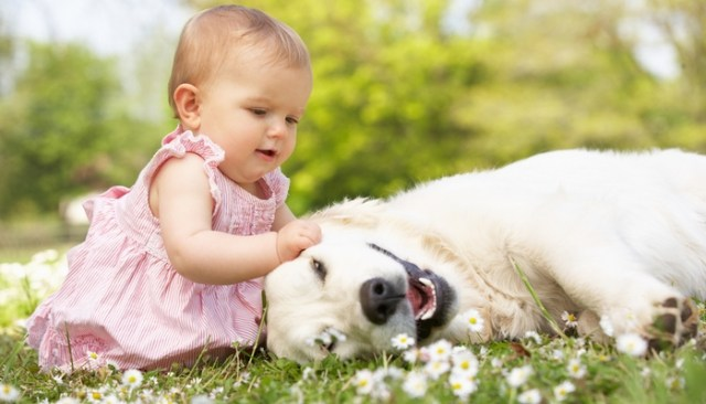Can Children Help Reduce Dog Anxiety