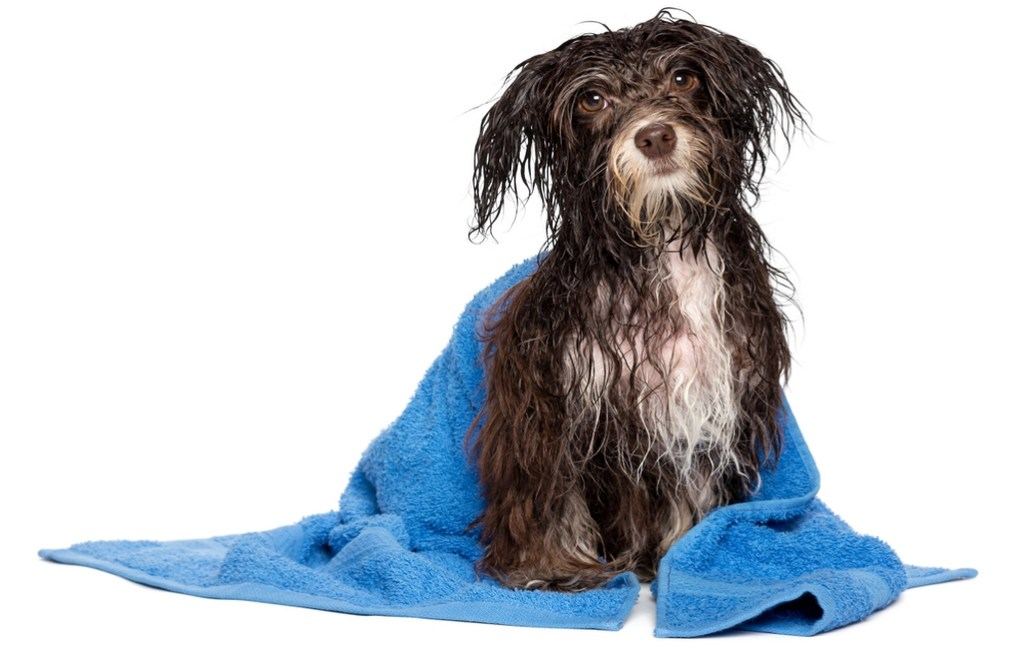 Dog Grooming Supplies Buyers Guide