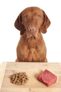How to Feed Dogs Raw Diet