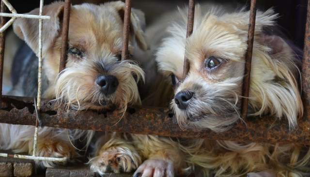 Philly Says No to Selling Puppies in Pet Stores and Flea Markets