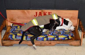 Rescued From a Burning House, This Pit Bull Is Now an Honorary Firefighter