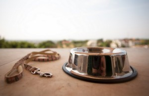 Resources To Help You Deal With the Loss of A Pet