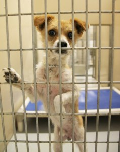 This Dog Was Minutes Away From Being Euthanized and Then This Happened