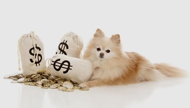 Tips For Saving Money on Vet Bills