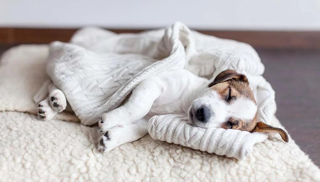 Top 5 Best Dog Blankets