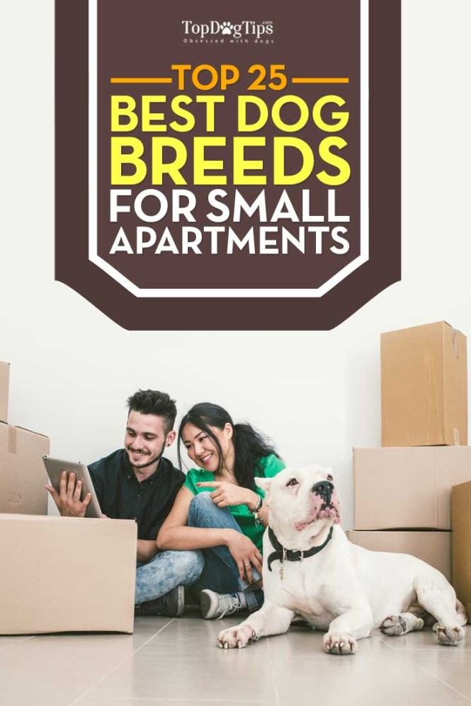 25 Best Dog Breeds For Small Apartments
