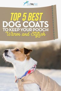 Top 6 Best Dog Coats for Winter (Cold, Rain and Bad Weather)