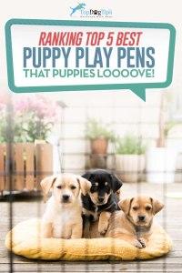 Top Best Puppy Play Pens