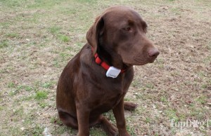 Tractive GPS Pet Tracker Giveaway