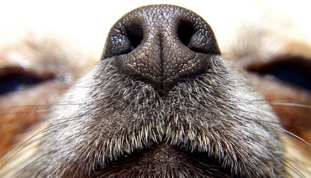 Ways of How To Relieve Stress in Dogs with Pheromones
