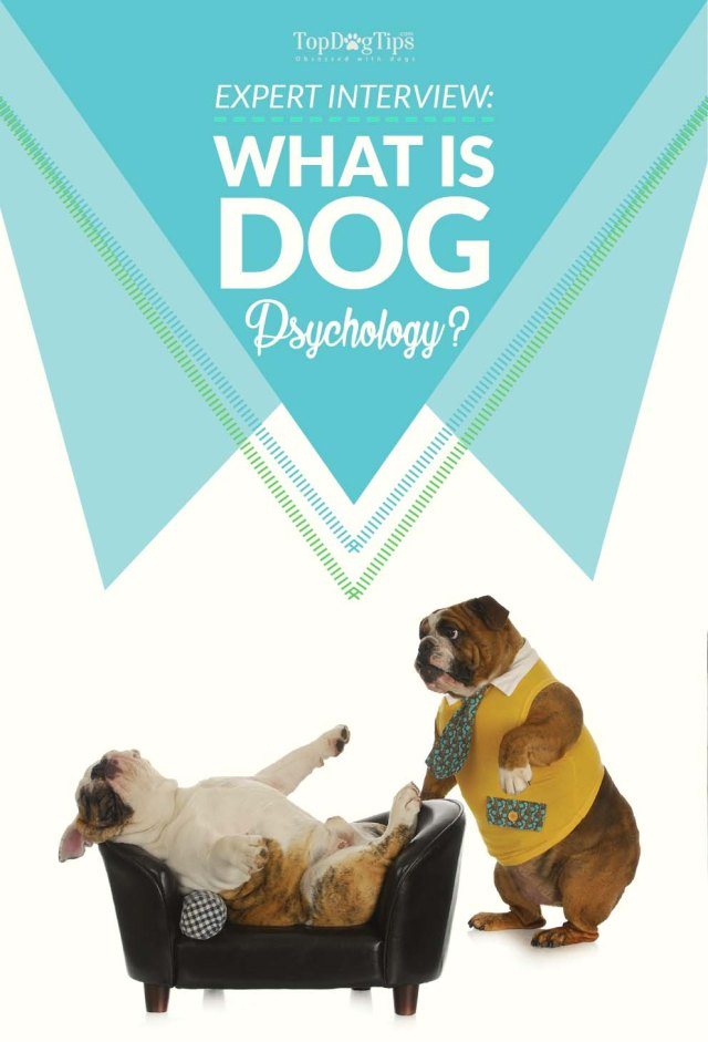 What is Dog Psychology