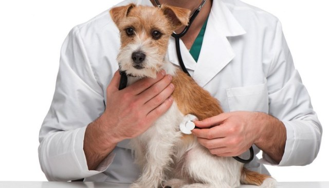 Evidence Based Veterinary Medicine vs Holistic Veterinary Medicine