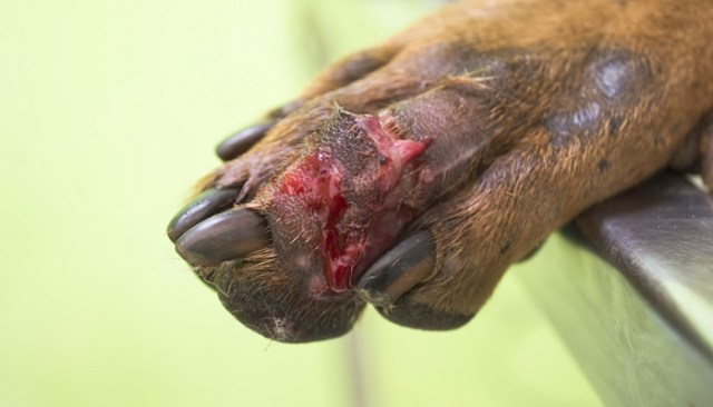 Is Your Dog At Risk Of Contracting This Deadly Disease